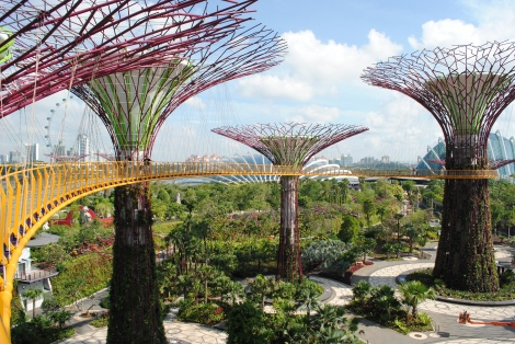 Supertree Skyway Offers Panoramic Views of Singapore's Marina Bay District