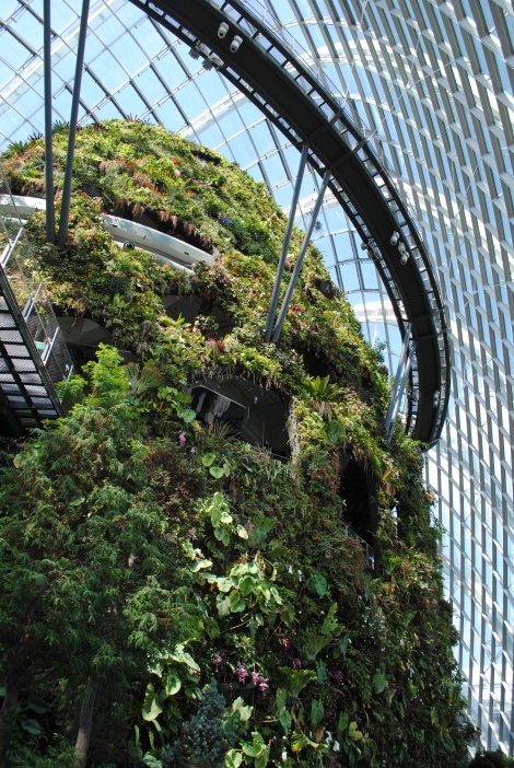 Skyways Circumnavigate the Cloud Forest Mountain