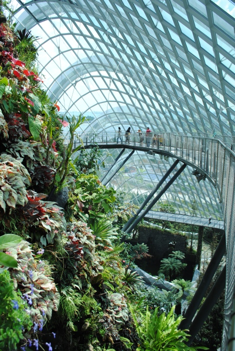 Skyway in the Cloud Forest Conservatory