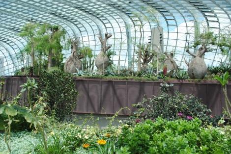 Australian Balboa Trees Inside the Flower Dome Conservatory