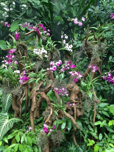 Orchid Mist House