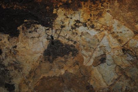 Dark Cave Spider