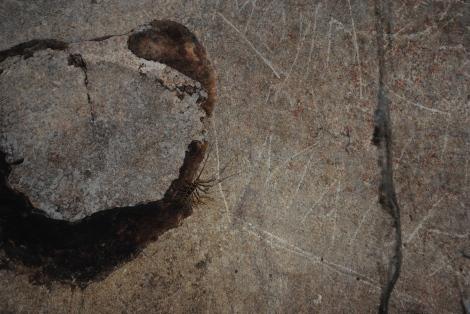 Dark Cave Centipede