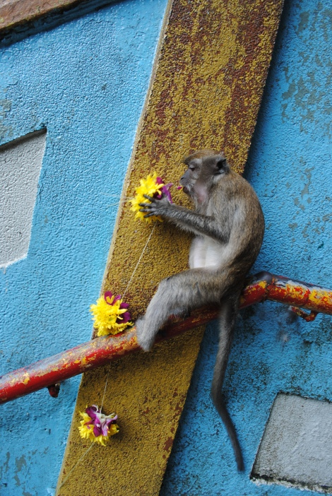 Monkeys greet you on the stairs to the Batu Cave entrance