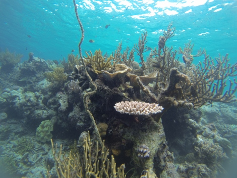 Wakatobi is known to have at least 750 of the 850 species of known corals
