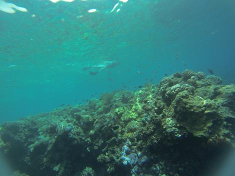 Wakatobi Marine Park