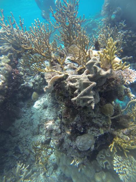 Explore Wakatobi's Reefs