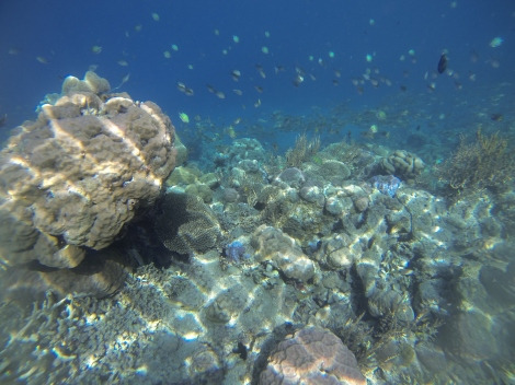 Wakatobi is home to huge schools of colorful coral fishes