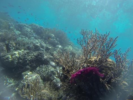 Hoga's Coral Reefs