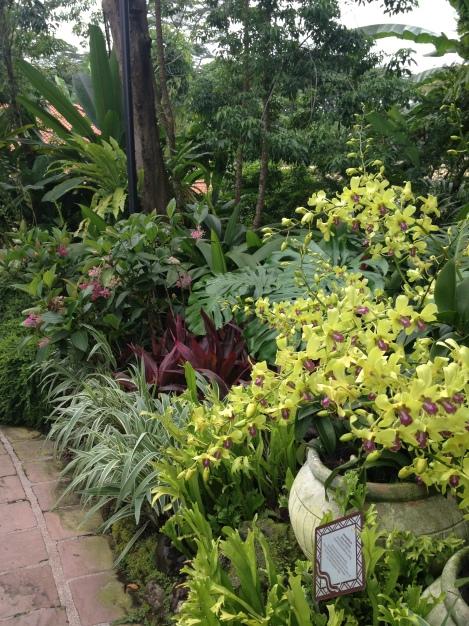 VIP Orchid Garden