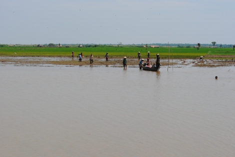 Farmers tend to their rice paddies along the Tonle Sap River