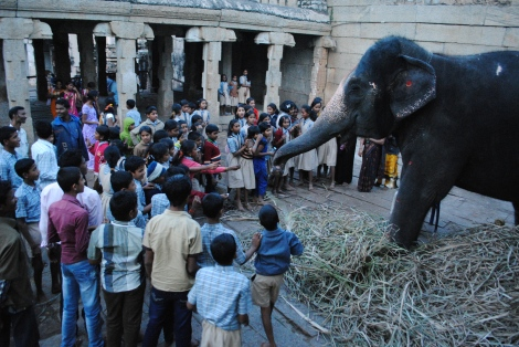 The Elephant Baba of Virupaksha Temple