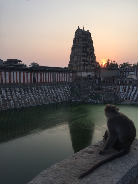 Sharing a sunset view of Virupaksha Temple with one of Hanuman's ancestors